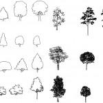 Autocad ağaç görünümleri