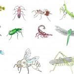 Böcek çizimleri dwg
