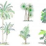 Tropikal ağaç çizimleri