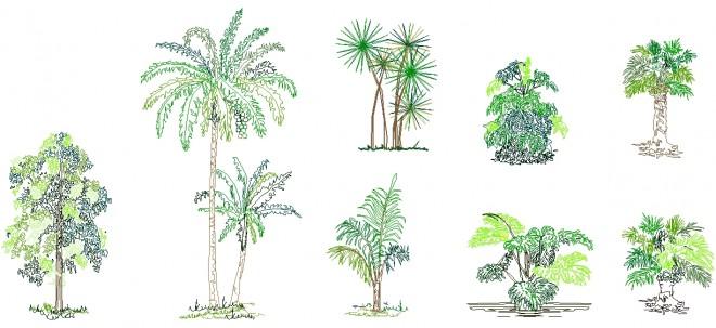 tropikal-agac-cizimleri-314dwgindir