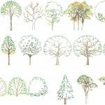 Ağaç şablonları