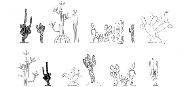 kaktus-cizimleri-dwgindir