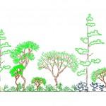 Orman silüeti