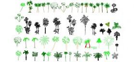 palmiye-agaclari-dwgindir