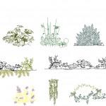 Autocad bitki çizimleri