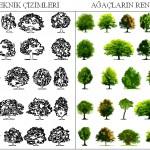 Profesyonel ağaç çizimleri