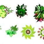 Renkli bitki çizimleri