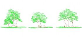 2-boyutlu-agac-cizimleri-dwgindir