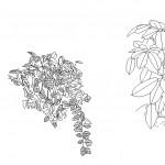 Dwg bahçe çiçekleri