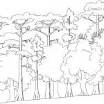 Dwg orman çizimi