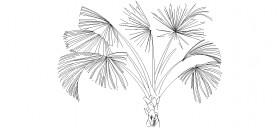 palmiye-agaci-tefrisi-dwgindir