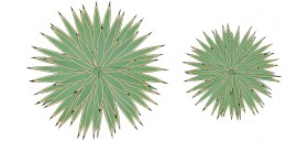agave-bitkisi-cizimi-dwgindir