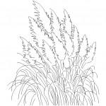 Lavanta çiçeği çizimi