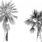 2d palmiye ağacı çizimi