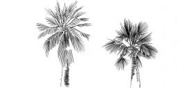 2d-palmiye-agaci-cizimi-dwgindir