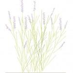 Lavanta çiçeği dwg çizimi