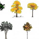 Renkli ağaç görünüşleri